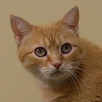 Adopt A Pet :: Noel - Dundee, MI