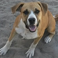Adopt A Pet :: Maggie - East Hartford, CT