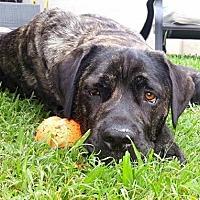 Adopt A Pet :: Tessa - Goodyear, AZ