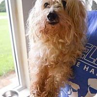Adopt A Pet :: Dexter - Woodstock, CT
