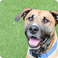 Adopt A Pet :: Dean - Meridian, ID