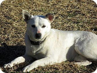 Terrier (Unknown Type, Small)/Blue Heeler Mix Dog for adoption in Bedminster, New Jersey - BETHANY(part of a bonded pair)