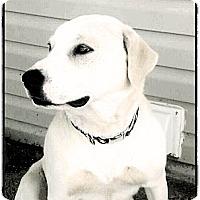 Adopt A Pet :: Isabelle - Hartsville, TN