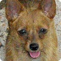 Adopt A Pet :: Keely - Mtn Grove, MO