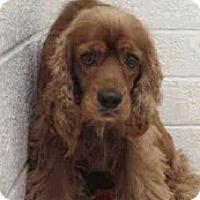 Adopt A Pet :: Charlie-Only $85 adoption fee! - Litchfield Park, AZ