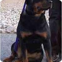 Adopt A Pet :: Kona - Las Vegas, NV