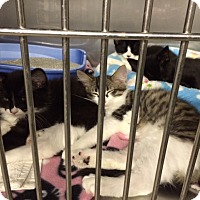 Adopt A Pet :: Smooch - Byron Center, MI