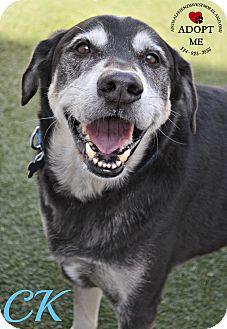 Labrador Retriever Mix Dog for adoption in Youngwood, Pennsylvania - CK