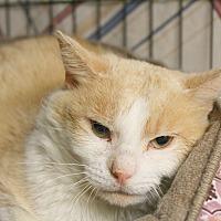 Adopt A Pet :: Charlie - Warwick, RI