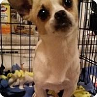 Adopt A Pet :: Dexter - Mesa, AZ