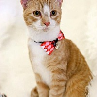 Adopt A Pet :: Jager Male - Knoxville, TN