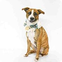 Adopt A Pet :: SAKRA - Orlando, FL