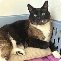 Adopt A Pet :: Eli - Newberg, OR