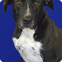 Adopt A Pet :: DOC HOLIDAY - LAFAYETTE, LA