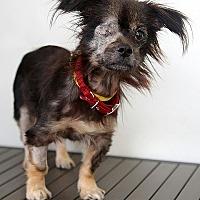 Adopt A Pet :: Cha-ka - Berkeley, CA