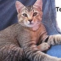 Adopt A Pet :: Telly - Polson, MT