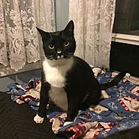 Adopt A Pet :: Storm - Berkeley Hts, NJ
