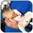 Photo 3 - American Bulldog/Bullmastiff Mix Puppy for adoption in Burbank, California - SPANKY
