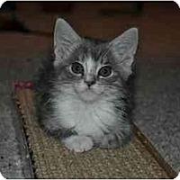 Adopt A Pet :: Ollie - Modesto, CA