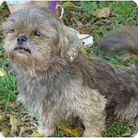Adopt A Pet :: Millie - Allentown, PA