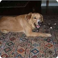 Adopt A Pet :: Charlie IV - Jacksonville, FL
