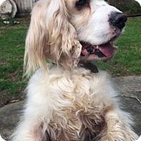 Adopt A Pet :: Bradley - Sugarland, TX