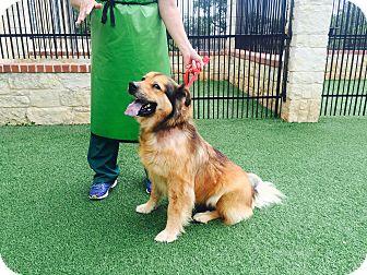 Shepherd (Unknown Type) Mix Dog for adoption in San Antonio, Texas - Ingrid
