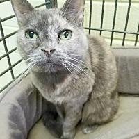 Adopt A Pet :: Cami - Edwards AFB, CA
