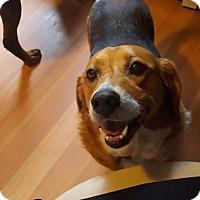 Adopt A Pet :: Sally - Lebanon, ME