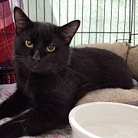 Adopt A Pet :: Big Boy Birk - Montgomery City, MO