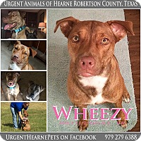 Adopt A Pet :: Wheezy - Hearne, TX