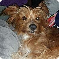 Adopt A Pet :: Georgie - Leduc, AB