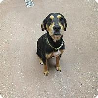 Adopt A Pet :: Toby *Petsmart GB* - Appleton, WI