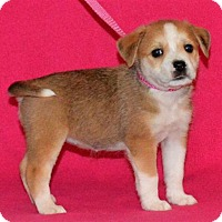 Adopt A Pet :: **JONIE** meet July 8th! - Mukwonago, WI