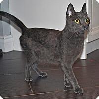 Adopt A Pet :: Teela - Mississauga, Ontario, ON