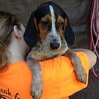 Adopt A Pet :: Mulan - Groveland, FL