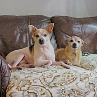 Adopt A Pet :: Marvin and Mitzi, Reduced fee! - Windham, NH