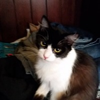 Adopt A Pet :: Tabookee - Mt Vernon, IN