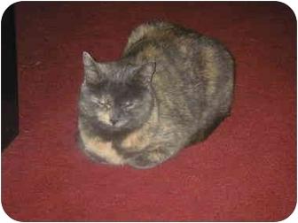 Domestic Shorthair Cat for adoption in Cheektowaga, New York - Winnie