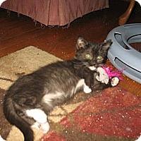 Adopt A Pet :: Crystal - Acme, PA