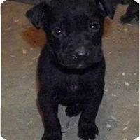 Adopt A Pet :: Zeplin - Claypool, IN