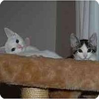 Adopt A Pet :: Hillary & Chelsea - Davis, CA