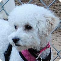 Adopt A Pet :: Ellie - La Costa, CA
