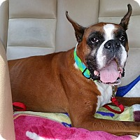 Adopt A Pet :: Lizzy - East Rockaway, NY