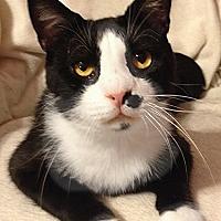 Adopt A Pet :: Charleston - Youngsville, NC