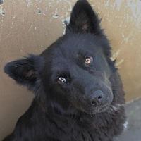 Adopt A Pet :: ASTRID - Red Bluff, CA