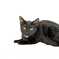 Adopt A Pet :: JAZ - Salinas, CA