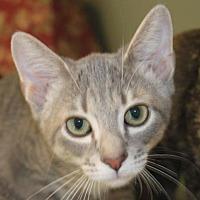Adopt A Pet :: Tucker - Crossville, TN