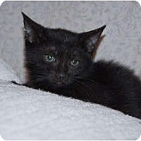 Adopt A Pet :: Shadow - New Egypt, NJ