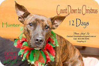 Bull Terrier/Terrier (Unknown Type, Medium) Mix Dog for adoption in Orangeburg, South Carolina - Hunter